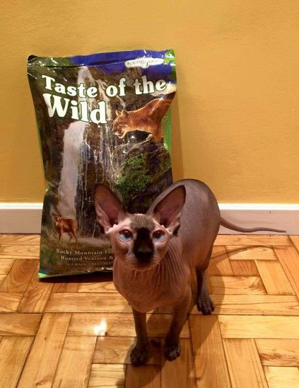 Фото от покупателей корма для кошек Taste of the Wild
