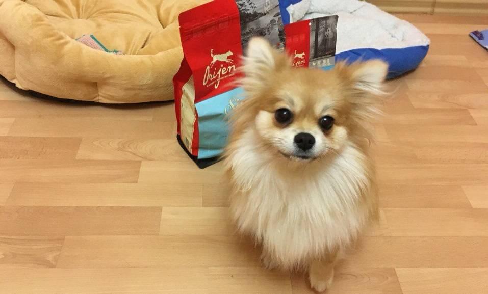 Корм Orijen для собак